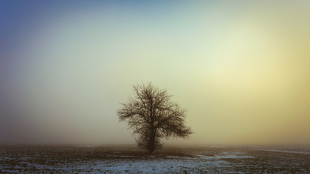 solitary-tree_web