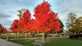 The colours of the trees were incredible. Love autumn!